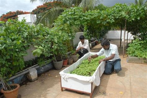 how to make garden on terrace organic terrace gardening home decor report