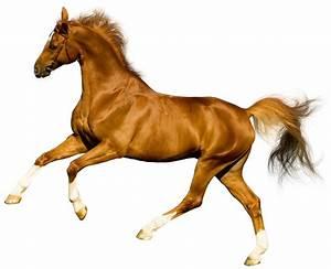 Paarden Foto U0026 39 S