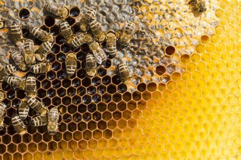 Favo de mel com abelhas Foto Grátis