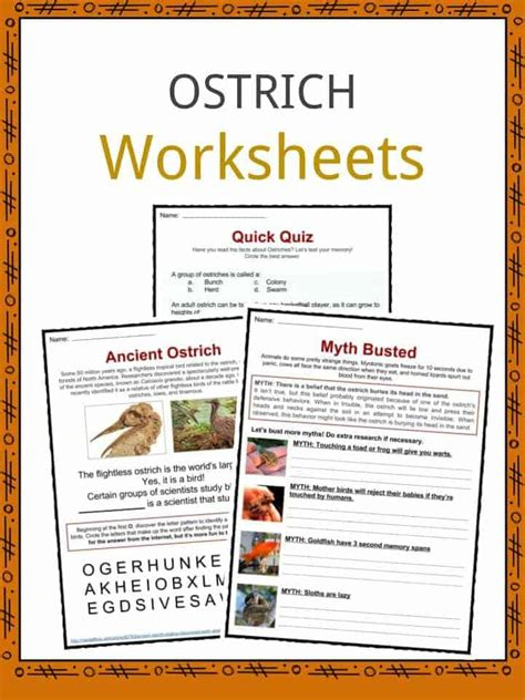 ostrich facts worksheets habitat information  kids