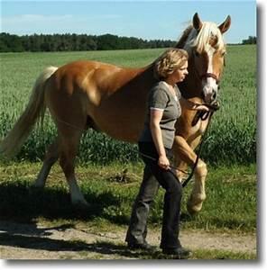 Wie Kann Man Lärm Verringern : wege zum pferd blog archiv f hren ist doch ganz einfach ~ Yasmunasinghe.com Haus und Dekorationen