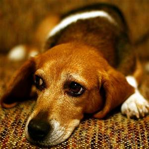 Sad Puppy Dog Eyes | Flickr - Photo Sharing!