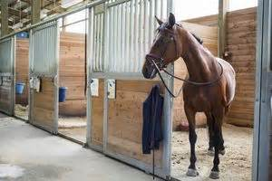 how to start an equine transport business
