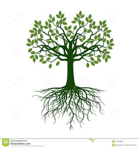 baum mit herzblättern gr 252 ner baum mit bl 228 ttern und wurzeln stock abbildung illustration fr 252 hling frech 112364923