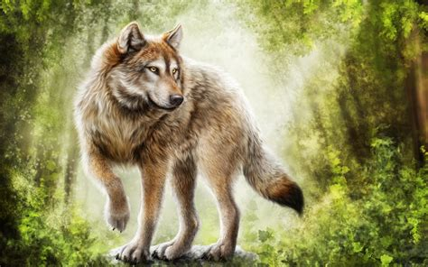 Angry Lone Wolf Wallpaper by Wolf Wallpapers 79 Background Pictures
