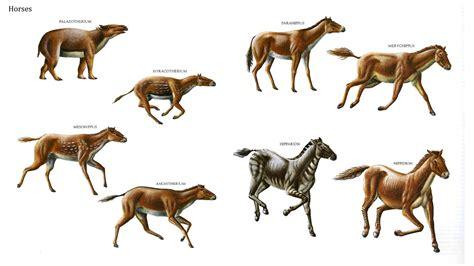 horses prehistoric animals horse dinosaurs extinct mammal early mesohippus hyracotherium merychippus mammals evolution animais historicos pre google hipparion largest dinosaur