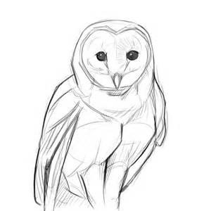 Owl Sketch Drawing