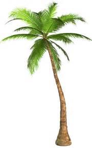 Transparent Palm Tree