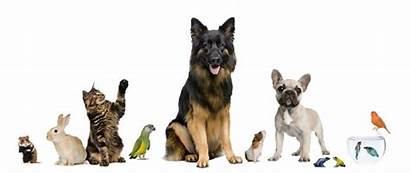Pet Pets Sitter Dogs Together Cats Hire