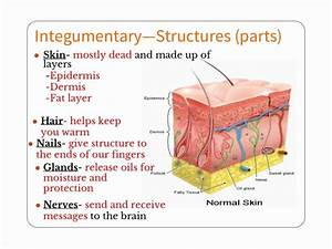 29 best ANATOMY, Integumentary System images on Pinterest ...