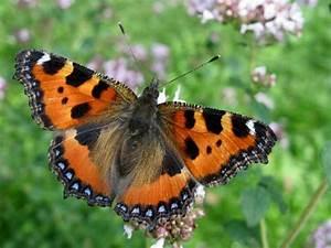 Bedeutung Schmetterling In Der Wohnung : lernhilfen ~ Watch28wear.com Haus und Dekorationen