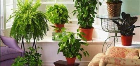 daftar tanaman pengusir nyamuk ampuh tanah kaya