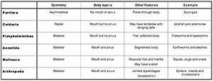 Sapiens Classification Chart Ib Biology 2 Gt Johnson Gt Flashcards Gt Topic 5 Ecology