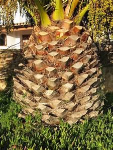 File Palm Tree Bark Jpg