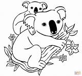 Koala Coloring Pages Mother Printable sketch template