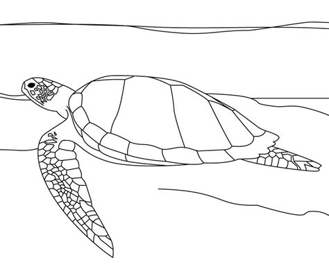 sea turtle coloring pages coloringpages
