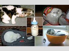 Cruel craze for stuffing your pet cat into glass jars