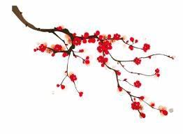 Dessin Fleur De Cerisier Japonais Noir Et Blanc : r sultat de recherche d 39 images pour fleurs cerisiers ~ Melissatoandfro.com Idées de Décoration