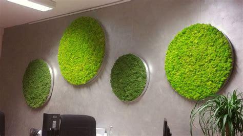 moss pictures moss wall design moss walls  moss