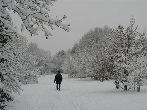 Someone Is Walking In A White Winter Wonderland Forest In