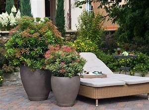 Kübelpflanzen Für Schatten : garten und terrasse xxl pflanzen ~ Eleganceandgraceweddings.com Haus und Dekorationen