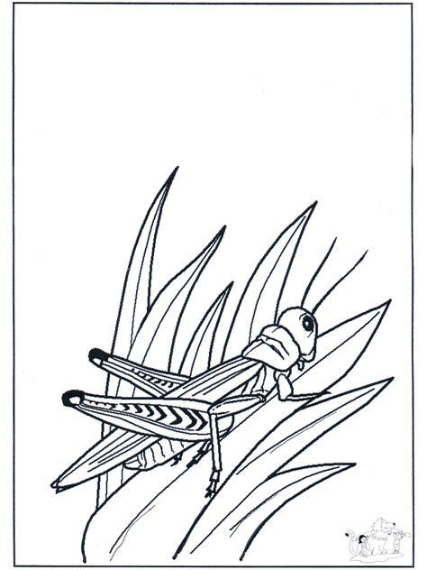 heuschrecke malvorlagen insekten