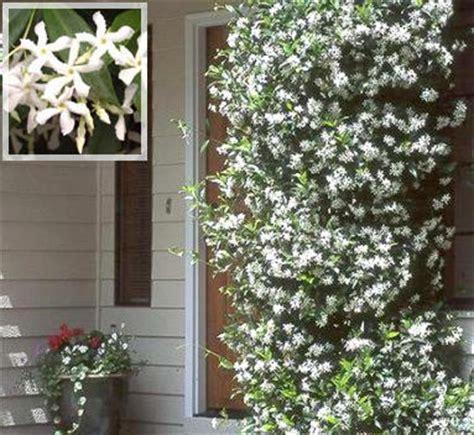 exotische planten en tropische planten  de tuin  de