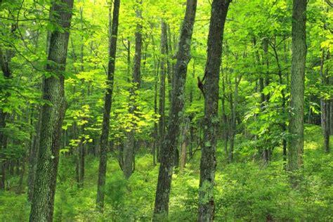 รูปภาพฟรี: ไม้ ภูมิทัศน์ ต้นไม้ ธรรมชาติ ใบ สภาพแวดล้อม ...