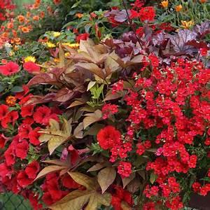 Balkon Gestaltungsideen Pflanzen : liebevolle pflanzidee f r balkon und terrasse ~ Lizthompson.info Haus und Dekorationen
