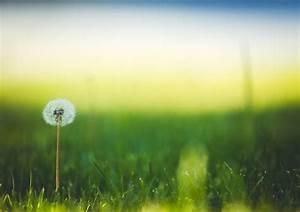 Rasen Düngen Bei Sonne : kostenlose foto natur gras horizont tau licht pflanze himmel sonne sonnenuntergang ~ Indierocktalk.com Haus und Dekorationen