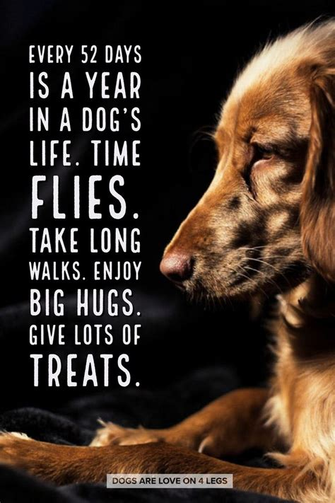 dog sayings ideas  pinterest puppy quotes