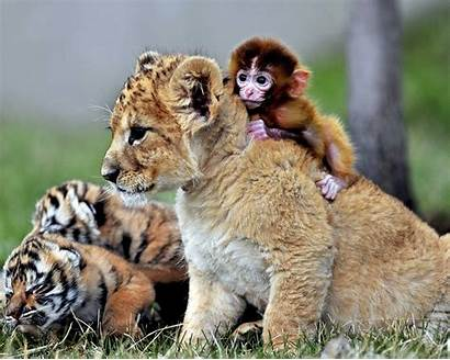 Animal Animals Wild Wallpapers Backgrounds Cool Resolution