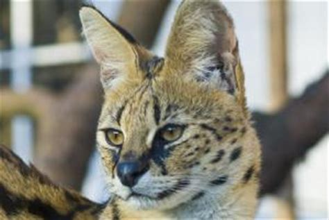 ausflugstipp leipziger zoo gondwanaland zeigt regenwald