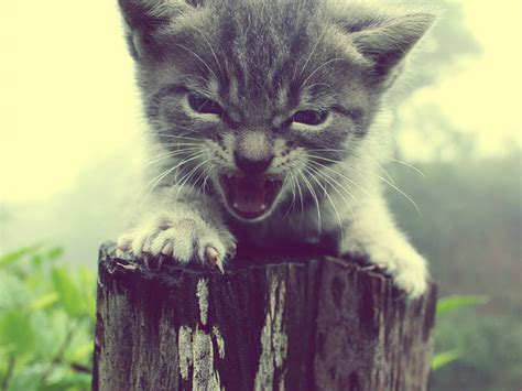 Angry Kittens Who Demand To Be Taken Seriously Right Meow