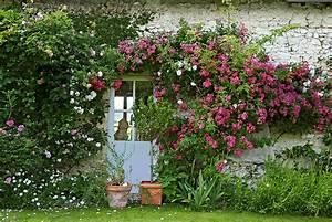 Comment Planter Un Camélia : un jardin de roses dans le val de loire d tente jardin ~ Melissatoandfro.com Idées de Décoration