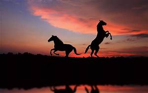 Horse Sunset Silhouette Full HD Wallpaper and Background ...