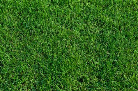 The 5 Best Fertilizers For Bermuda Grass + Reviews