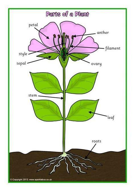 parts   plant  flower postersworksheets sb