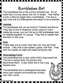 bats informational texts main idea comprehension