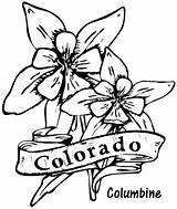 Coloring Flower Columbine Colorado Flowers State Pages Drawing Drawings Printable Clipart Hibiscus Sheets Template Clip Central Sketch Arizona Library sketch template