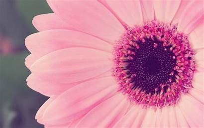 Desktop Floral Backgrounds Flower Background Wallpapers Pink