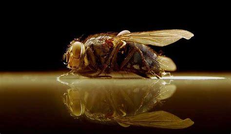 Fruchtfliegenfalle So Werden Sie Obstfliegen Los