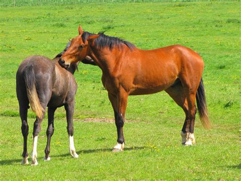 farm animals horse animal domestic horses meadow grazing mustang foal livestock colt mare brown outdoor pasture rural prairie farmland mammal