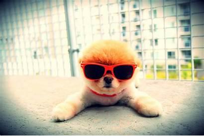 Cool Animals Super Adorable Web Puppy Header