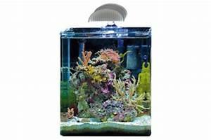 Dennerle Nano Cube 60 Complete Plus : meerwasseraquarium komplettset test meerwasser ~ Frokenaadalensverden.com Haus und Dekorationen