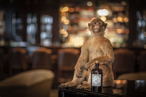 siege pernod ricard monkey jpg pernod ricard créateurs de convivialité