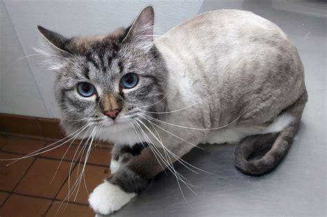 Behavior Concerns  All Cat Clinic