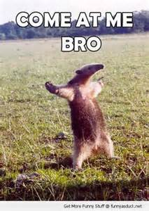 Come at Me Bro Anteater