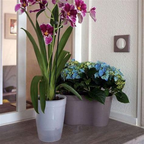 entretien de l orchidee en pot 28 images entretien d une orchid 233 e l orchid 233 e de
