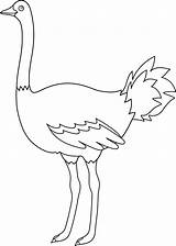 Ostrich Coloring Emu Clip Template Outline Bird Colorable Line Birds Templates Egg Parrot Sweetclipart Sketch sketch template